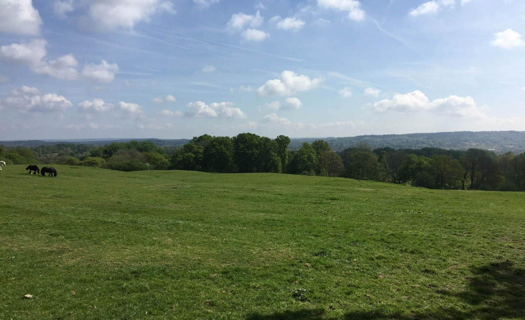 Wheatham-farm-fiesta-fields-field-to-hire copy
