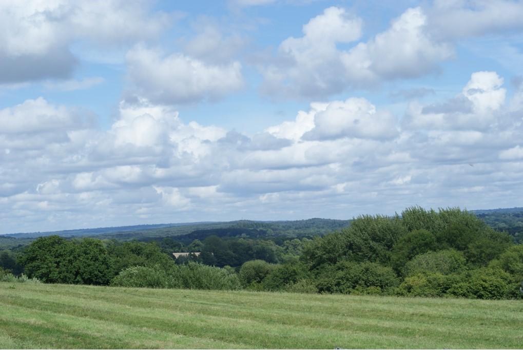Wheatham Farm field view