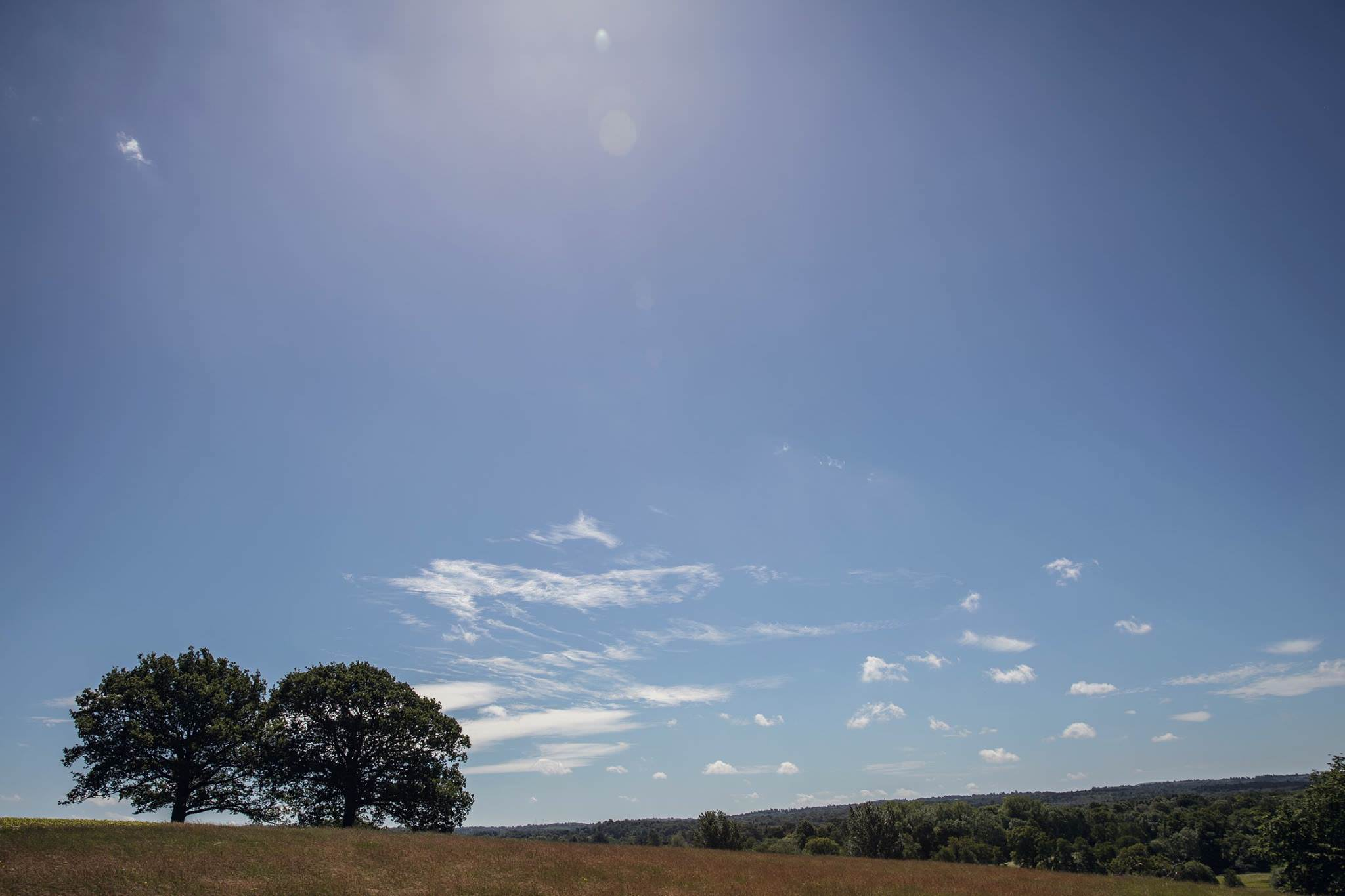 beautiful sunny day field with two oak trees outdoor ceremony venue